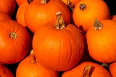 Pumpkin 23rd Alberta